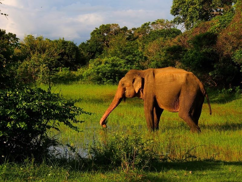 Sri-Lanka-2016-elephant