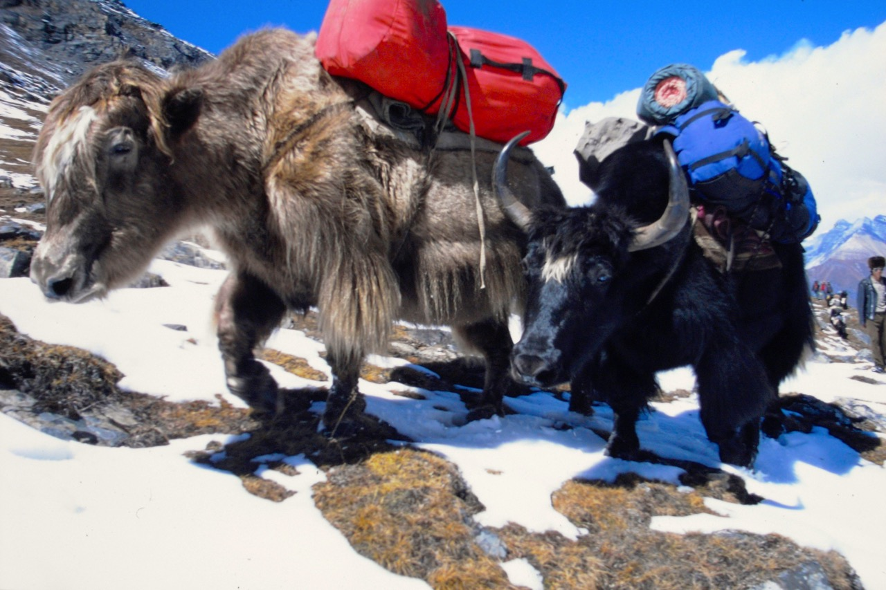 Nepal Animals