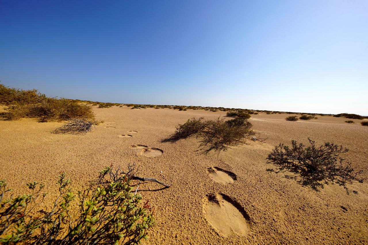 Footprints in the desert in oman