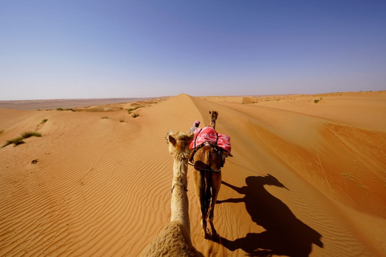 dromedary riding in oman
