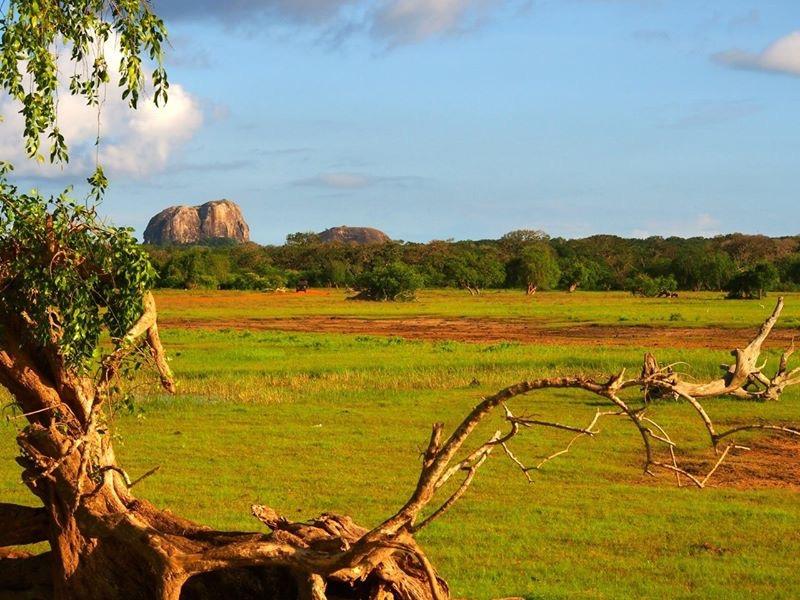 Sri-Lanka-2016-grass