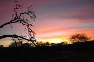 Trip to Namibia 2