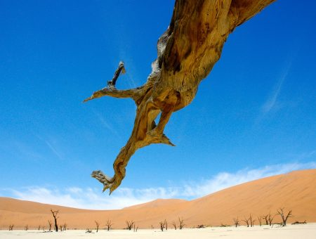 Namibias Sparse Diversity