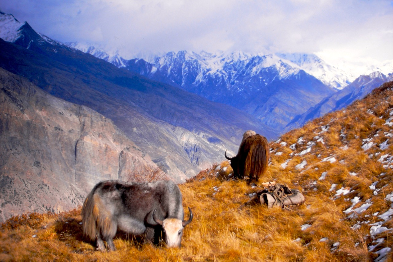 Nepal Mountains Animals