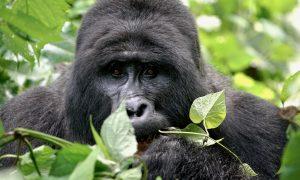 Uganda, auf dem (Silber)Rücken der Korruption